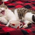 愛知の猫カフェまとめ!里親になれるお店舗まで