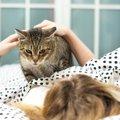 猫が飼い主の顔の上で寝るのはどうして?