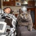 猫が『顔の上』に乗りたがるときの理由3つ!愛猫の気持ちを汲んで対応する…
