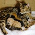 猫が出産にかかる時間と難産の時の注意点や対策