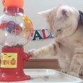 お菓子くれなきゃ自分で出しちゃうぞ!猫のセルフハロウィン!