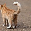 猫が逃げた時の探し方と帰ってこない時の対処法