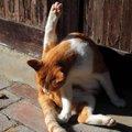猫のおしりは拭くべきなの?正しい拭き方と注意点