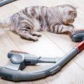 猫が掃除機のことを嫌がる理由とは