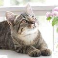 猫の癒やし効果が現代のストレス社会を救う?!