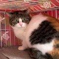 母猫2匹を保護しTNRへ…猫の幸せを願う草の根の活動をレポート!