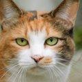 日本猫の種類や性格、飼い方について