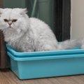 猫が便秘で嘔吐をする理由と効果的な解消法