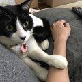 猫を撫でたときの『鳴き方』でわかる心理5つ!嫌がっている場合も…