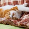 『猫はこたつで丸くなる』これって本当?