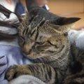 絶対寝るものかっ!猫ちゃんの睡魔との戦い