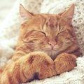 猫の認知症(痴呆症)について原因や症状、治療方法