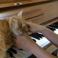 ニャンコと連弾!?演奏が始まるとピアノに飛び乗る猫ちゃん!