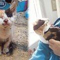 盲目で耳も聞こえない子猫…優しい男性との出会いで幸せに!