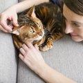 猫の体調不良を見分ける5つのサイン