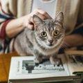 猫の年齢を人間に例えるといくつ?計算方法から早見表まで
