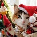 LAYLAの12猫占い【12/7~12/13】のあなたと猫ちゃんの運勢
