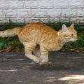猫の身体能力の秘密は身体の構造にあり!人間よりも圧倒的に高い運動…