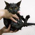 猫をお風呂に入れる時の最適な温度