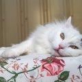 猫を留守番させるための準備と注意点