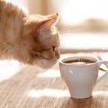 猫アレルギーの人が猫カフェへ行く時の対策