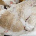 寝ているところに尻尾がペシッ!お休みを妨害される猫ちゃん