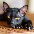 猫が爪を噛む(引っ張る)しぐさの理由