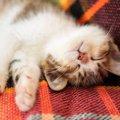 猫に必要な睡眠時間はどれくらい?『寝不足』が招く危険なトラブル4つ