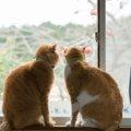 猫が親離れをする理由と問題について