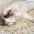 猫の耳垢が黒い!考えられる病気や治療の方法