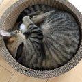 猫の『丸まり方』で判定する心理状態3つ