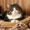 4歳になった猫の注意点や病気について
