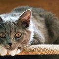 猫コロナウイルスの症状や予防法・治療について