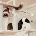 猫を多頭飼いする時にストレスを与えないための注意点