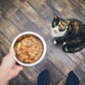 猫の『偏食』が引き起こす危険トラブル3つ!今すぐできる改善策とは?