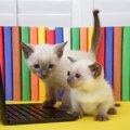 猫の漫画ブログ11選!人気のおすすめ作家たち