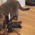 一流モデル猫さんを写真に撮る名カメラマンな猫さんがツイッターを席…