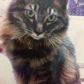 布団が大好きでおしっこする猫…どうしたら止めてくれる?