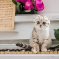 垂れ耳猫が抱える問題について