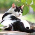 白黒の猫はどんな性格?特徴や種類まで