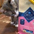 原材料チェックは必須!猫のフードは「ブルーバッファロー」がおすすめ