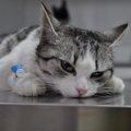 猫の腸閉塞とは?症状や原因、便秘などから考えられる事