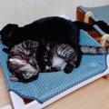 """多頭飼育環境から保護…我が家の癒しになった猫の""""がんも"""""""