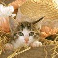 子猫が甘える5つの仕草と心理状態