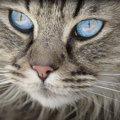 猫も静電気は痛い!発生させない6つの方法とおすすめグッズ