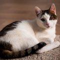 猫との暮らしでカーペットはアリ?ナシ?