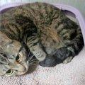 間に合ってよかった…臨月で保護された母猫、移動してすぐの出産・子育て