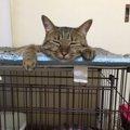 猫が夏に起こりやすい病気と対処法