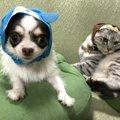猫も犬もかぶると可愛い♡『かわいいかわいいねこのかぶりもの』シリーズ