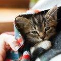猫伝染性腹膜炎と診断されたら。治療法と飼い主にできること